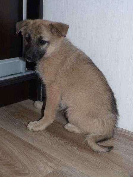 Обаятельная девочка-щенок