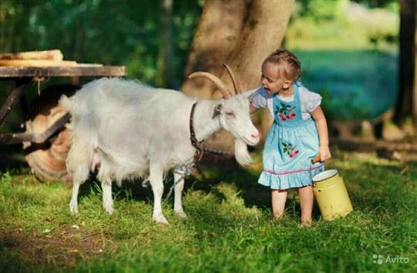 Молоко коровье от 100 руб в Подольске