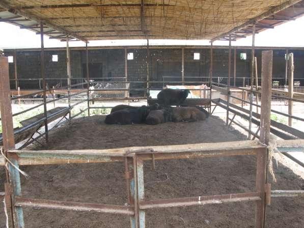 продаю ферму ОЛТИН ТЕПА,ЗАНГИАТЕ Ташкенте 20 соток 3 комн