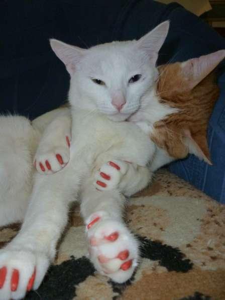 Продаются антицарапки для кошек в Казани фото 12