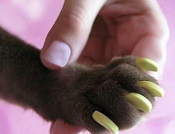 Продаются антицарапки для кошек в Казани