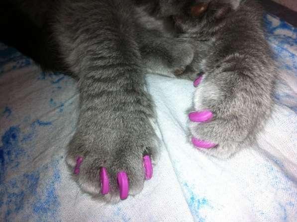 Продаются антицарапки для кошек в Казани фото 7