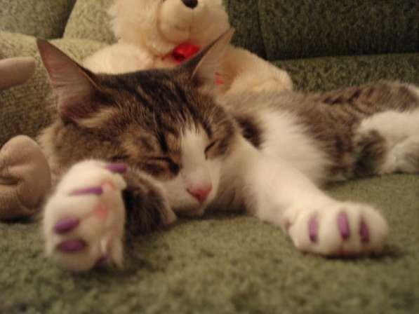 Продаются антицарапки для кошек в Казани фото 11