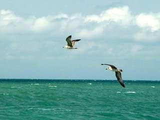 Участки не далеко от моря, от 10-12 соток в собственности