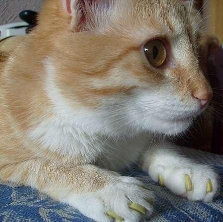 Продаются антицарапки для кошек в Казани фото 9