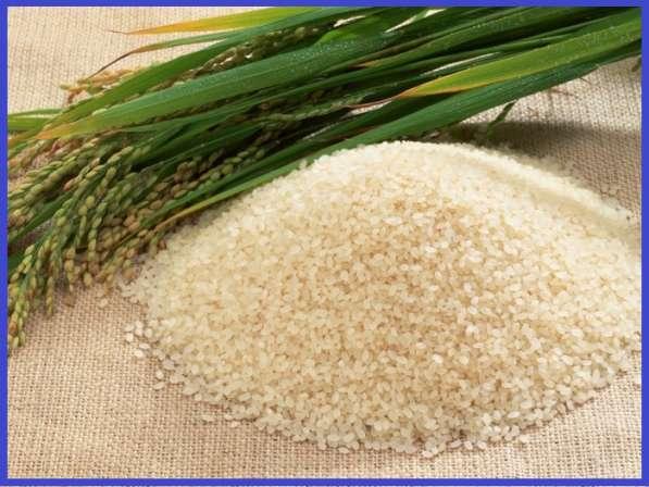 Продам рис оптом в мешках , 35 руб за кг