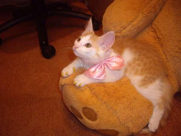 Продаются антицарапки для кошек в Казани фото 6