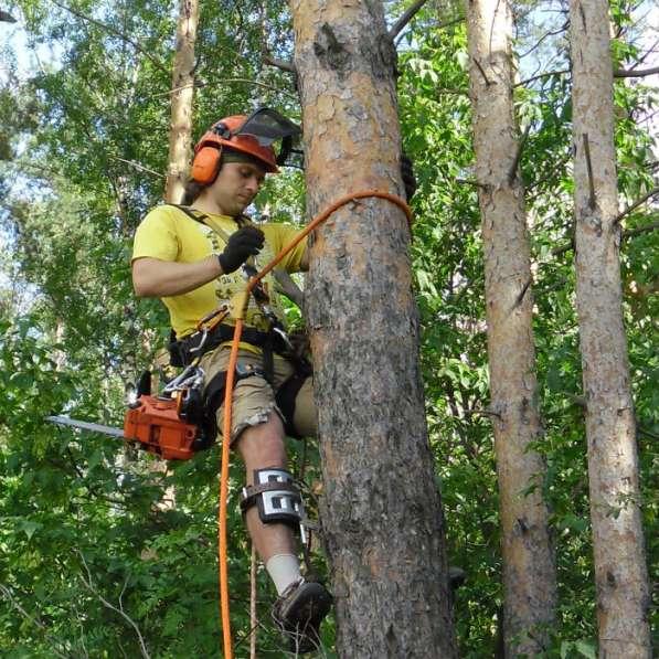Спиливание деревьев, веток.