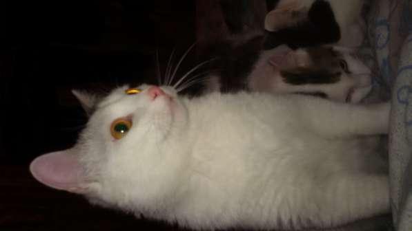 Отдам котят. в Новосибирске
