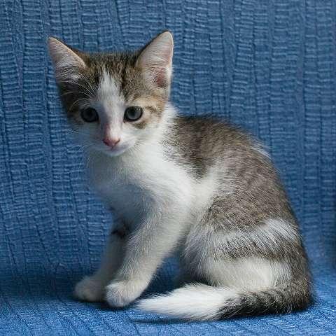 Котенок Ася в добрые руки