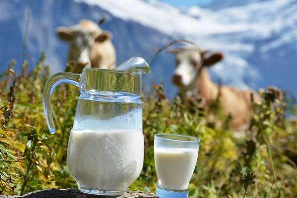 Молоко коровье от 100 руб в Подольске фото 3
