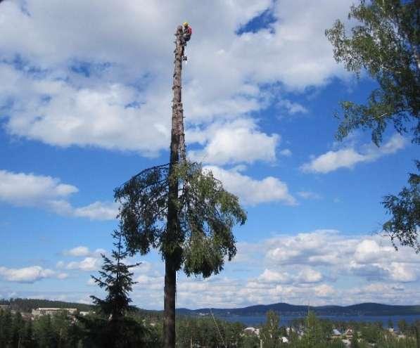 Спил и обрезка деревьев. Альпинисты