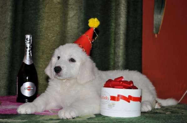 Белый мишка в подарок на Новый Год!