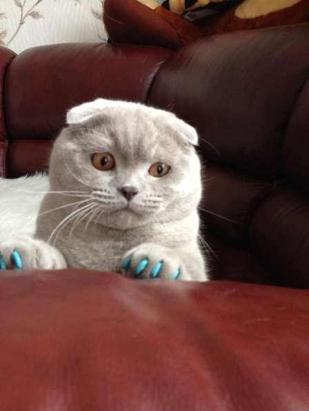 Продаются антицарапки для кошек