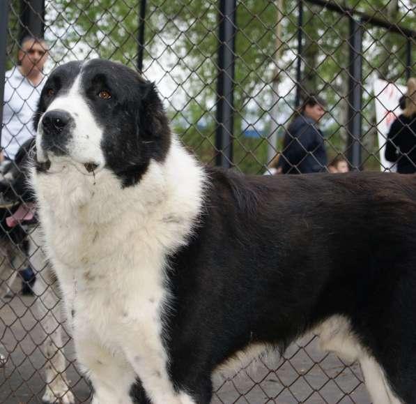 Собака для загородного дома
