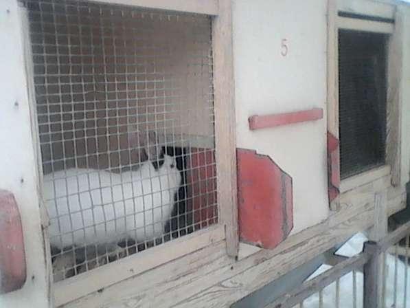 Комбикорма для кур и кроликов в Ульяновске