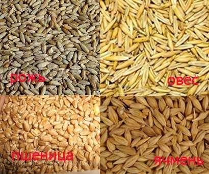 Зерно фуражное, ячмень