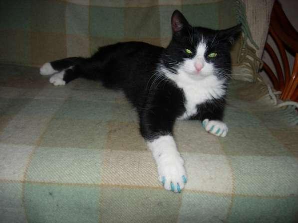 Продаются антицарапки для кошек в Казани фото 4