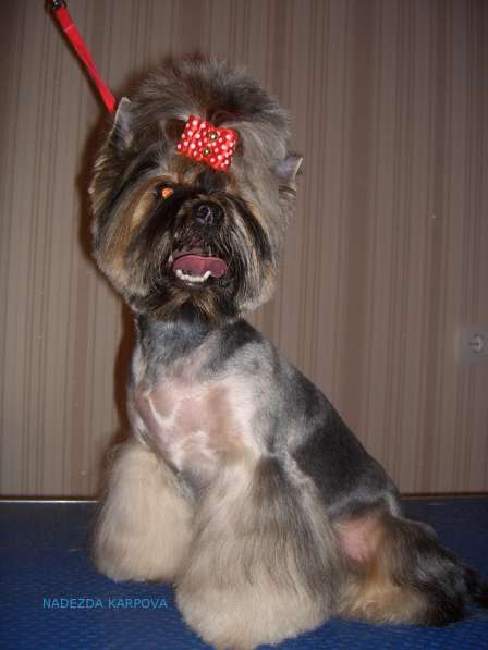 Стрижка собак. Челябинск, Ленинский район