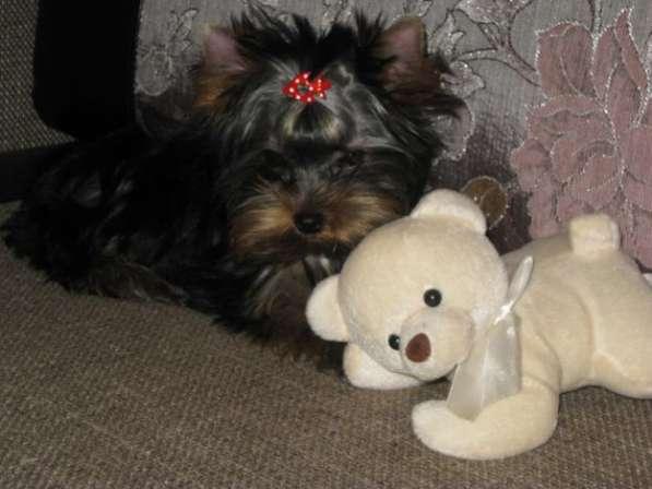 йорик - девочка от Деда Мороза