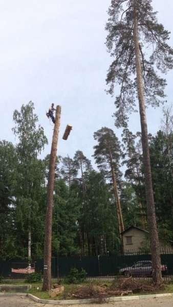 Спилить, удалить дерево в Лыткарино,Верхнее Мячково,Сосновый