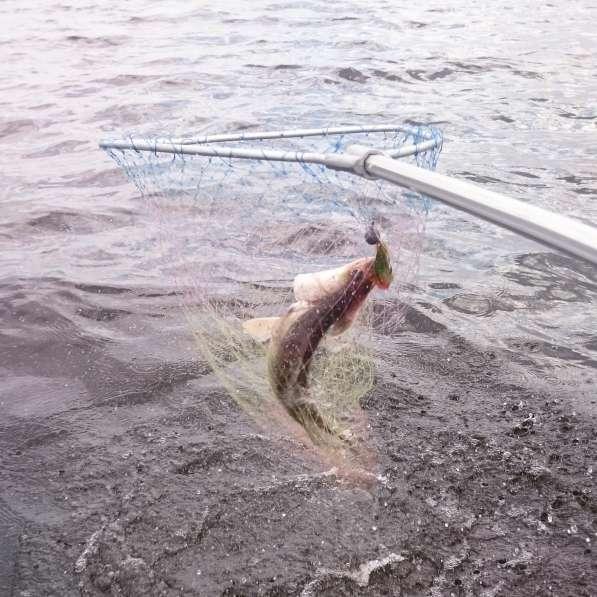 Организую рыбалку на Волге