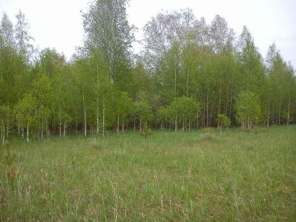 Земельный участок, 450 сот. под усадьбу, лес, озеро, соседи