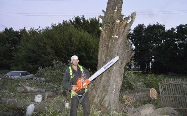 Спил деревьев, выкорчёвывание пней