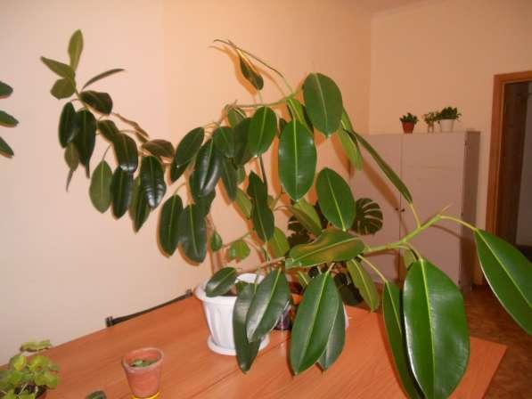 растение комнатное