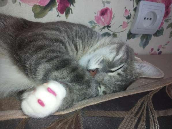 Продаются антицарапки для кошек в Казани фото 8