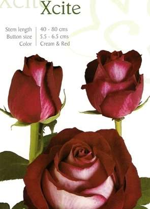 Розы цветы оптом,свежесрезанные розы из Эквадора