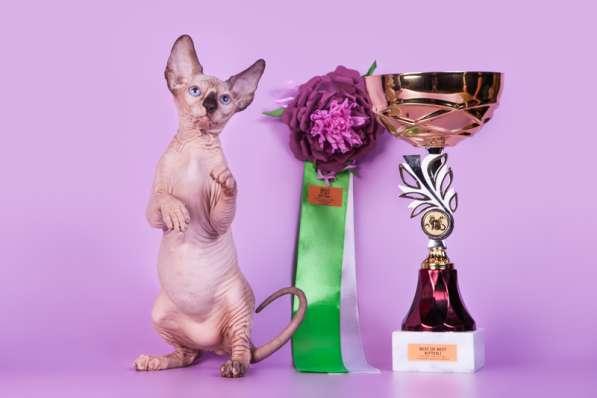 Гуманоид? Котёнок Эльф, бамбино, двэльф, сфинкс!