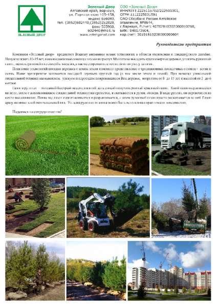 саженцы, рулонные газоны, деревья крупномеры