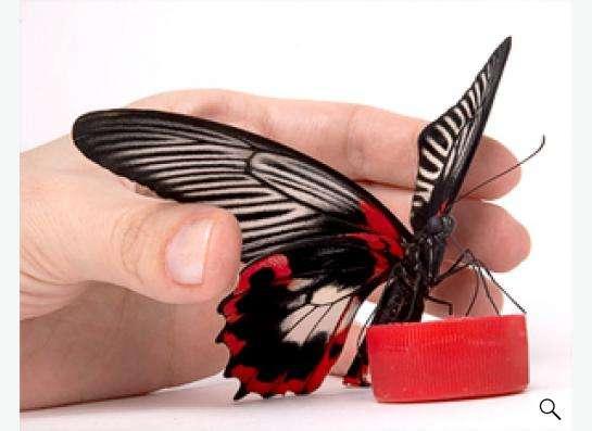 Живые бабочки в подарок в Новосибирске фото 3
