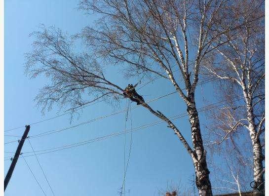Спил, снос, удаление аварийных деревьев в Новосибирске