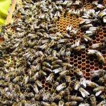 Пчелопакеты, в Ульяновске