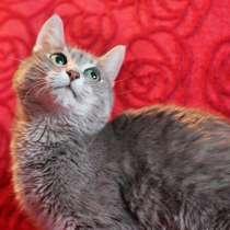 Кошка-жемчужина Алиса в дар добрым людям, в г.Москва
