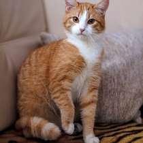 Ласковое солнышко Яша,домашний котик подросток в добрые руки, в г.Москва