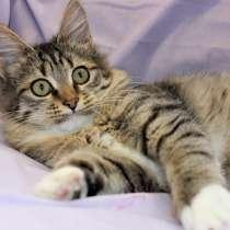 Бесподобный домашний котенок Герда в добрые руки, в г.Москва