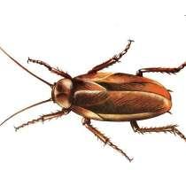 Обработка квартир от насекомых, в Самаре