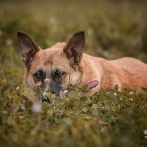 Чудесная молодая очень добрая собака Сандра в дар, в г.Москва