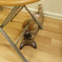 Маленькие смешные щенята ищут дом, в г.Санкт-Петербург