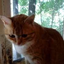 Кошечка ищет любящий дом, в Сергиевом Посаде