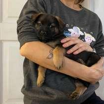 Трогательный щенок от маленькой собачки, в г.Санкт-Петербург