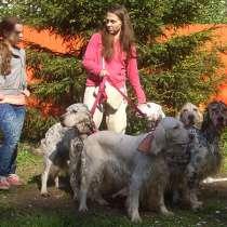 Нужен помощник для ухода за собаками, в г.Москва