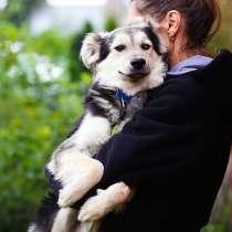 Красивый щенок с пушистыми ушками, в г.Санкт-Петербург