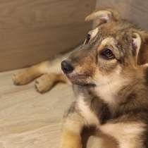 Маленькое трогательное солнышко-щенок, 6 мес, в г.Санкт-Петербург