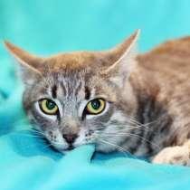 Скромник серенький котенок Ганс ищет дом, в г.Москва