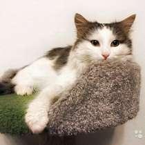 Ласковый, вальяжный молодой котик Бартон в дар, в г.Москва
