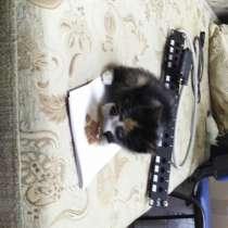 Отдам котёнка в добрые руки, в Новосибирске